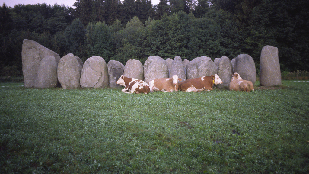 kls schönheit kühe und Steine